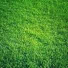 Lawn Fertilization - When Should You Apply in Fall to Your Myrtle Beach Area Lawn?