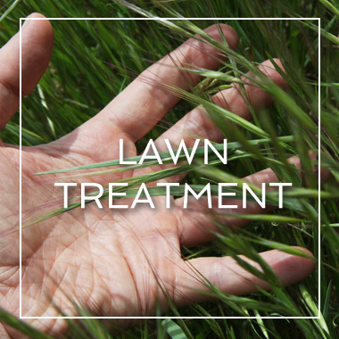 Myrtle Beach Lawn Treatment