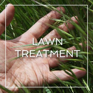 Myrtle Beach Lawn Treatment