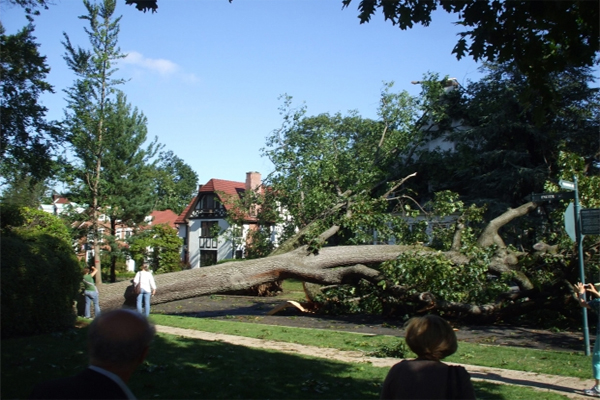 The best ways to keep your trees healthy and standing, and what to do if one comes down.