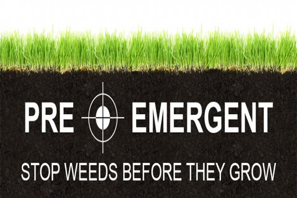 Pre Emergent Now To Help Stop Weeds Later