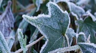 Freezing Temps Expected – Protect Your Plants