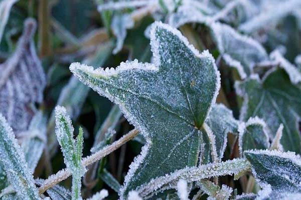 Tips for protecting your plants during unexpected freezing temps.