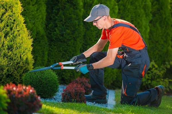Issues to Keep in Mind When Landscaping the Backyard of Your Home