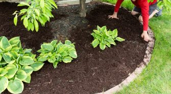 Fertilizer: The Secret Ingredient to Perfect Landscaping for Your Home