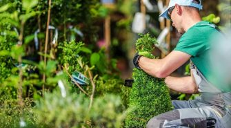 Some Landscaping Myths That Prevent You from Having a Healthy Lawn