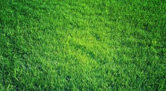 Lawn Fertilization – When Should You Apply in Fall to Your Myrtle Beach Area Lawn?